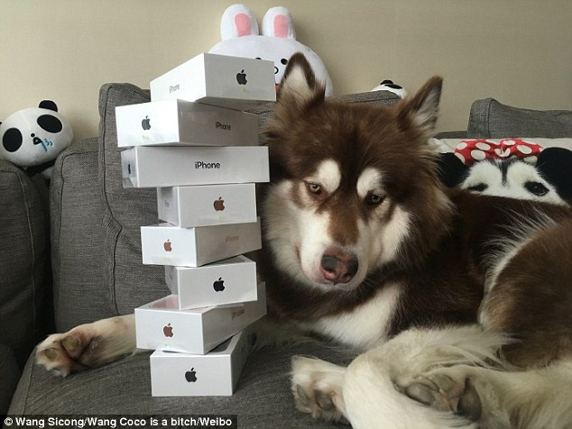 dog-with-iphones